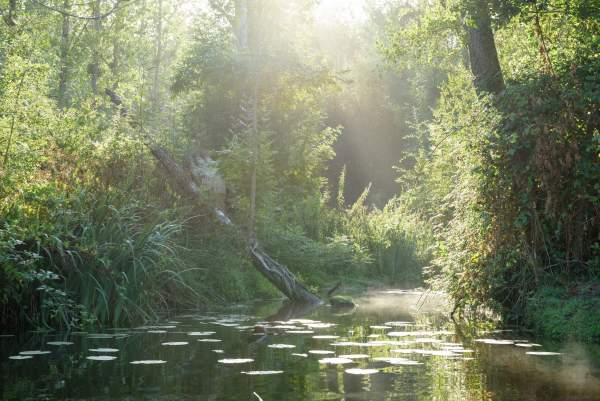 Rives Nature Cottages et Camping en Bretagne Lieu de Détente